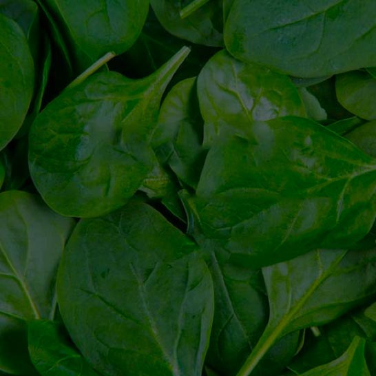 50 cups Spinach